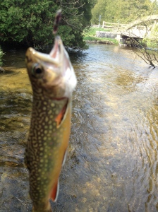 A change of cast brings a brookie!